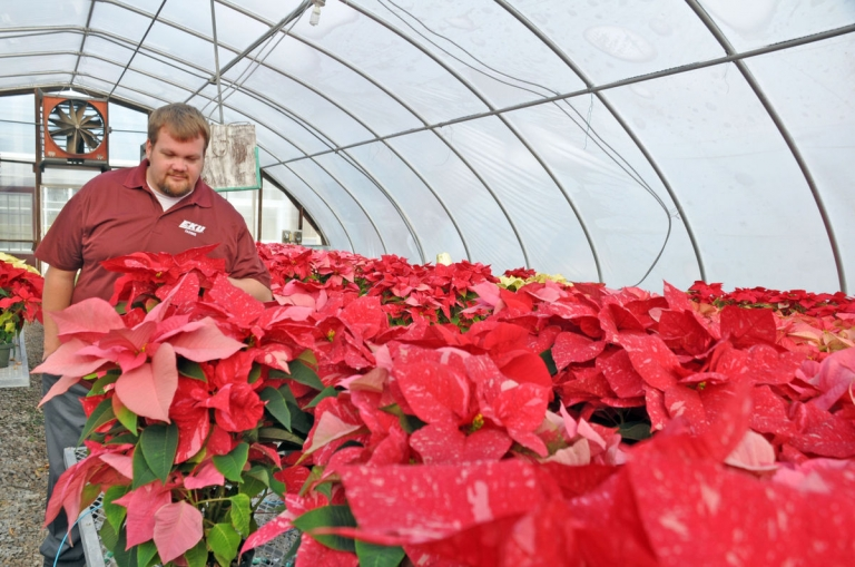 Horticulture Technician John Duvall at the poinsettia sale-Ricki Barker/Register