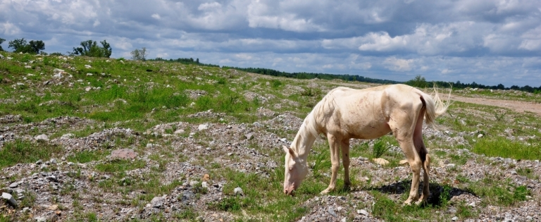 A free-roaming horse grazes in Breathitt County.