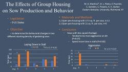 The Effects of Group Housing on Sow Production and Behavior