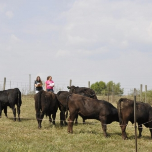 Agriculture students have many hands-on learning opportunities